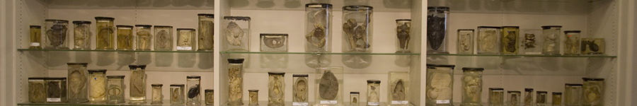 The Wohl Pathology Museum, one of the most historic collections of surgical pathology in the world