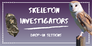 Skeleton Investigators (5)