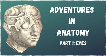 Adventures In Anatomy Eyes - Online