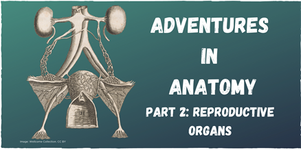 Copy Of Copy Of Adventures In Anatomy Reproductive Organs - Online